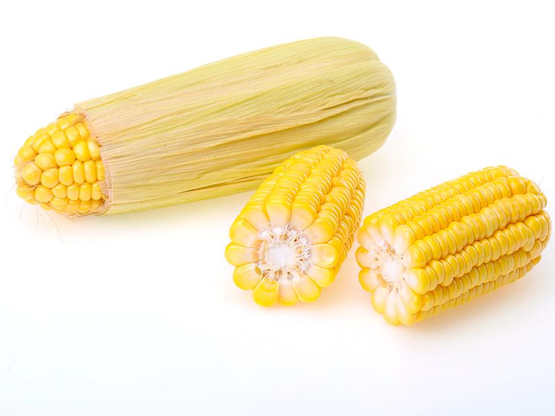"""玉米芯粉生产的""""数据官"""""""